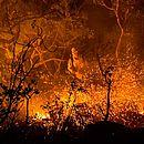 Incêndio causou o fechamento do Parque Nacional da Chapada dos Veadeiros, em Goiás