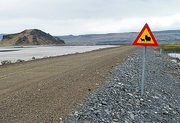 Essa placa islandesa indica que a via pode ser habitada por ovelhas