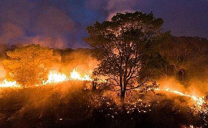 Incêndio que está devastando Pantanal pode ter sido provocado por fazendeiros