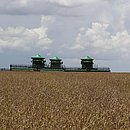Produção de soja na Bahia terá aumento de 6,3% na produção, estima IBGE