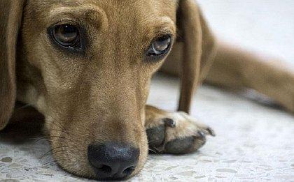 Projeto de lei aumenta punição para quem maltratar cães e gatos