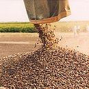 A lavoura de café se firmou como uma das mais importantes em Barreiras