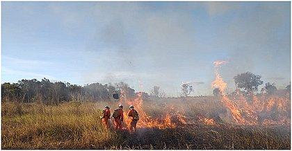 Bombeiros controlaram três focos de incêndio florestal em Luís Eduardo em um só dia