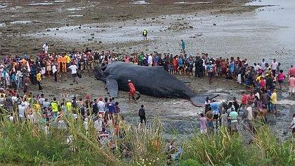 Saiba o que fazer se encontrar um animal marinho morto na praia