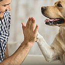 O convívio com os seres humanos afeta diretamente a fisiologia do cachorro