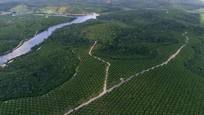 Fazendas Sustentáveis: um caminho sem volta