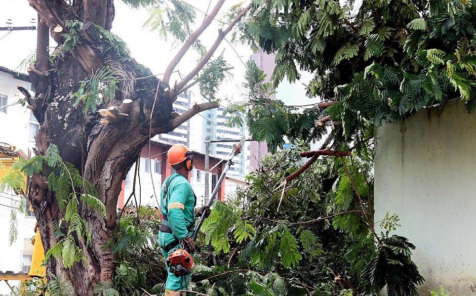 Queda de árvores aumenta durante período chuvoso em Salvador