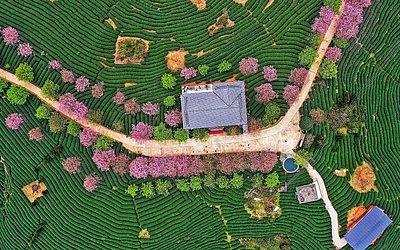Vista aérea de um campo de chá em Zhangping na província de Fujian na China Oriental.