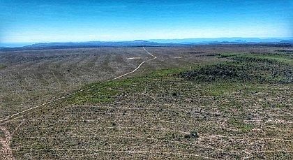 Área na Chapada dos Veadeiros é desmatada e governo apura crime ambiental