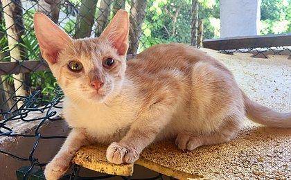 ONG promove evento de adoção com animais especiais neste domingo (24)