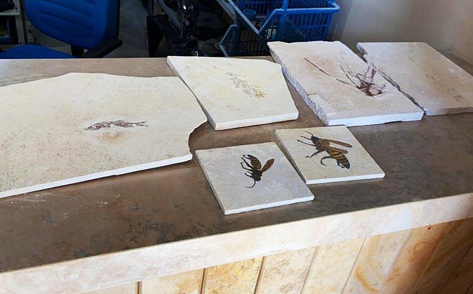 Operação investiga tráfico de fósseis na Chapada do Araripe