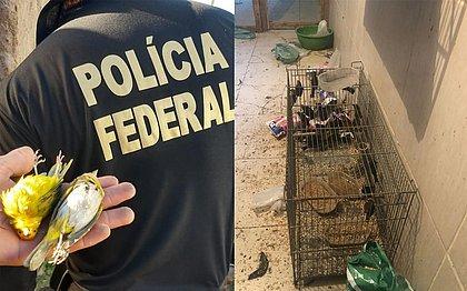 Operação da PF cumpre mandados contra traficantes de aves na Bahia