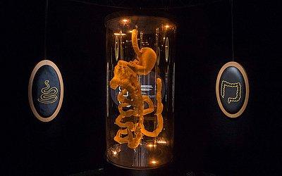 """Sistema digestivo em exibição na exposição intitulada """"Microbiote"""" (microbiota) no """"Cite des sciences et de l'Industrie"""" Museu de Ciências, em Paris."""