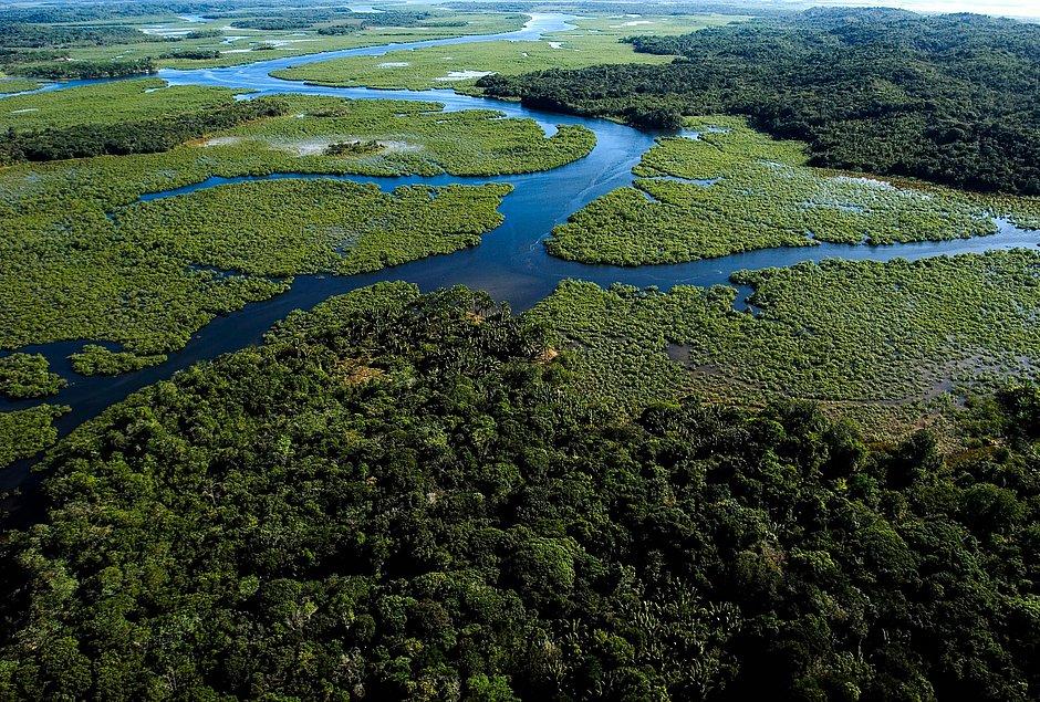 Operação para coibir desmatamento da Mata Atlântica começa na BA e mais 16 estados