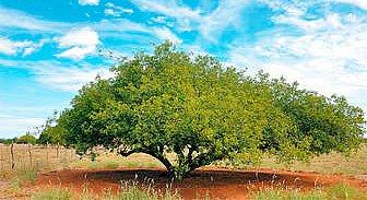 Tecnologia e pesquisa tornam produtivas as regiões secas