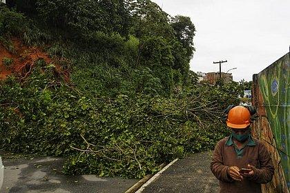 Árvore cai e deixa trânsito bloqueado em rua do Engenho Velho de Brotas