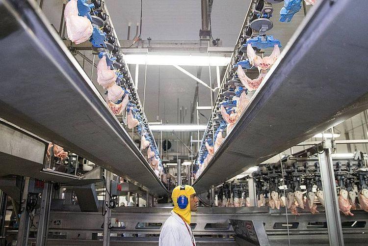 UE proíbe 20 frigoríficos brasileiros de exportar frango