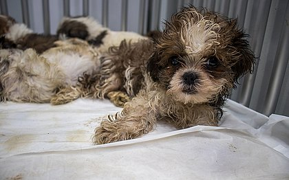 Os animais tinham sinais de maus tratos e seriam vendidos em petshops de Salvador, Recife e Petrolina.