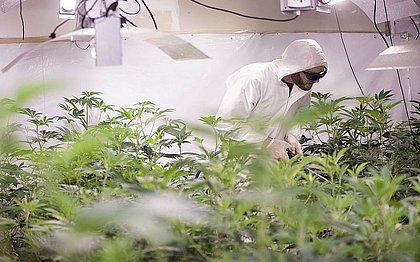 Bahia: Justiça determina que remédio à base de Cannabis seja ofertado pelo SUS