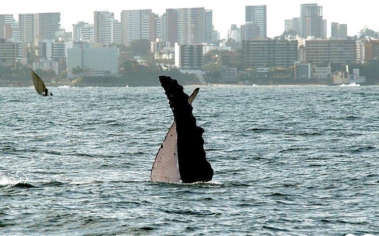 Virada Sustentável promove Fórum de Turismo de Observação de Baleia Embarcado