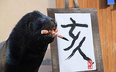 Um leão-marinho usa um pincel para escreve javali em caracteres chineses. Segundo este horóscopo , o ano novo será regido pelo signo deste animal. No Hakkeijima Sea Paradise, em Yokohama, subúrbio de Tóquio.