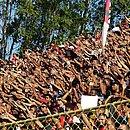 Torcedor do Leão pode garantir presença no duelo contra o São Paulo a partir desta terça-feira (23)