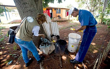 Acúmulo de água e lixo pode ocasionar aumento no número de mosquitos Aedes aegypti