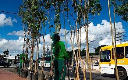 Avenida Suburbana terá plantio de 1,4 mil árvores em 8 meses