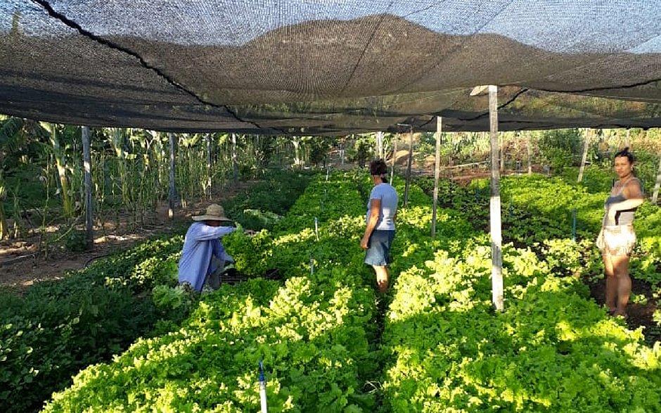 Agricultura familiar em Rio do Pires