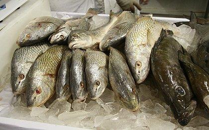 Pescados de praias baianas atingidas por óleo estão próprios para consumo, diz estudo