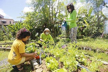 Salvador já tem 50 hortas e quatro pomares; veja os benefícios