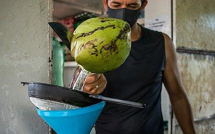 Coco salgado: Bahia perde espaço para produtos asiáticos e vê produção desabar