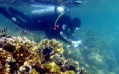 Aquecimento das águas do mar mata 90% dos corais-de-fogo no sul da Bahia