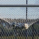 Esquadrão precisou ir pouco buscar a bola no fundo das redes