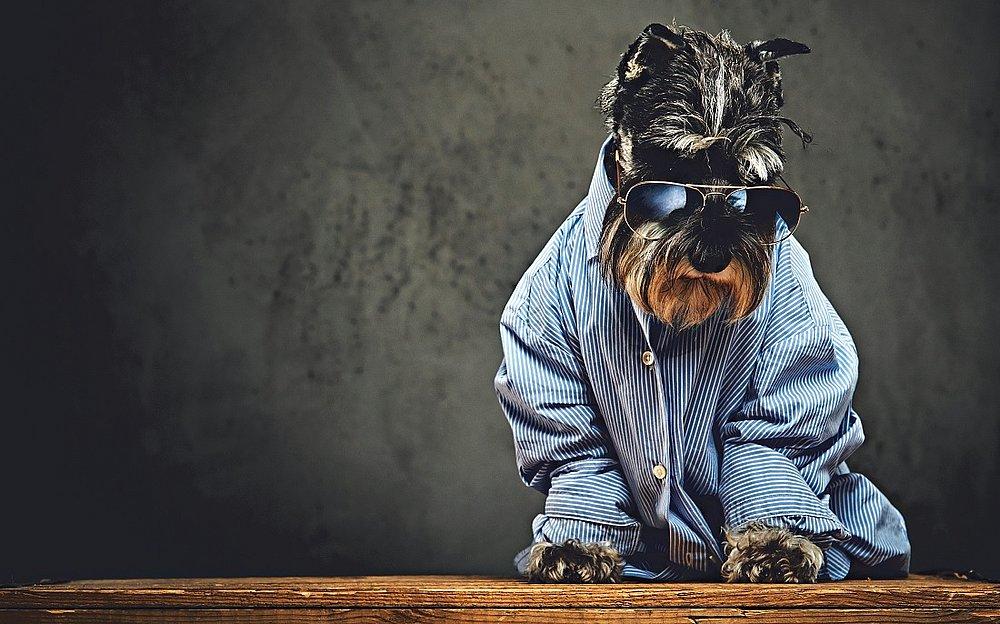 Foto: Reprodução/Shutterstock