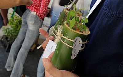 Planta foi distribuída para participantes