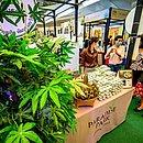 Feira de produtos com cannabis na Tailândia