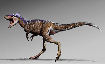Folheto do Museu de Ciências Naturais da Carolina do Norte mostra o primo menor do T-rex que poderia fornecer um elo na compreensão de como os predadores  apex evoluiram para o topo da cadeia alimentar, afirmou o cientista que desenterrou o dino.