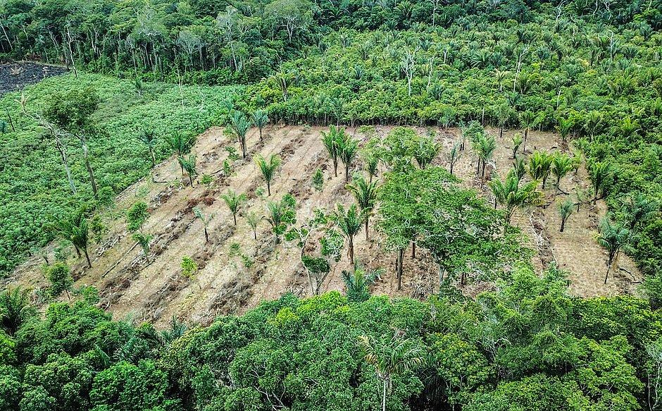 Cultura das agroflorestas é tema de curso gratuito