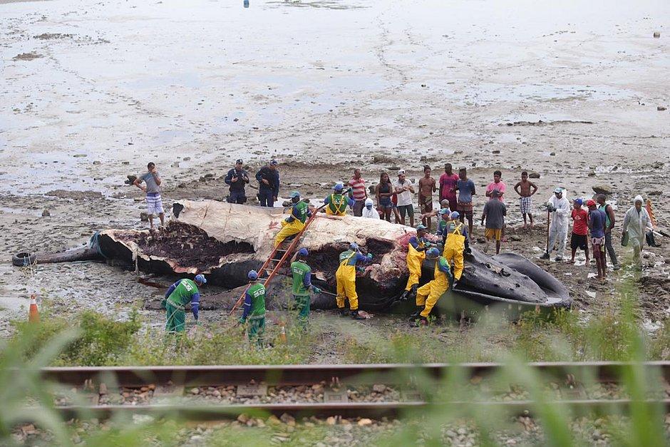 Após encalhe, moradores recortam pedaços de baleia jubarte em Coutos