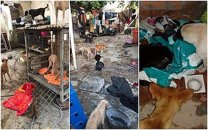 São Cristóvão: Falsa veterinária é presa por manter 120 animais em condições insalubres