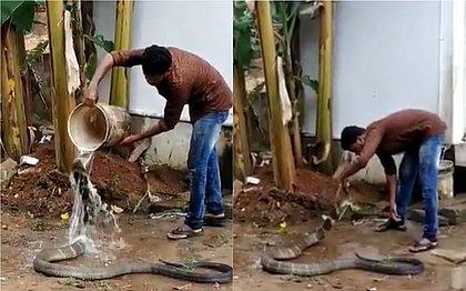 Vídeo de cobra-rei recebendo banho e 'cafuné' após ser resgatada viraliza; assista