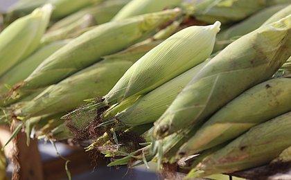 Show do milhão: mesmo sem festa, milho será boa opção para compor mesa junina