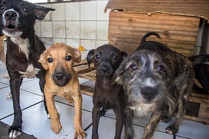 Enquanto shih tzus são cobiçados, Salvador tem mais de mil pets para adoção; veja onde