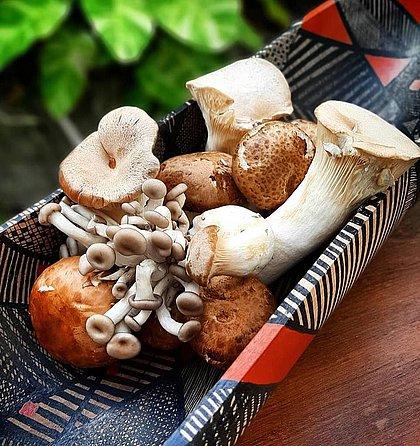 Cogumelos sobre obra da artista Maria Adair