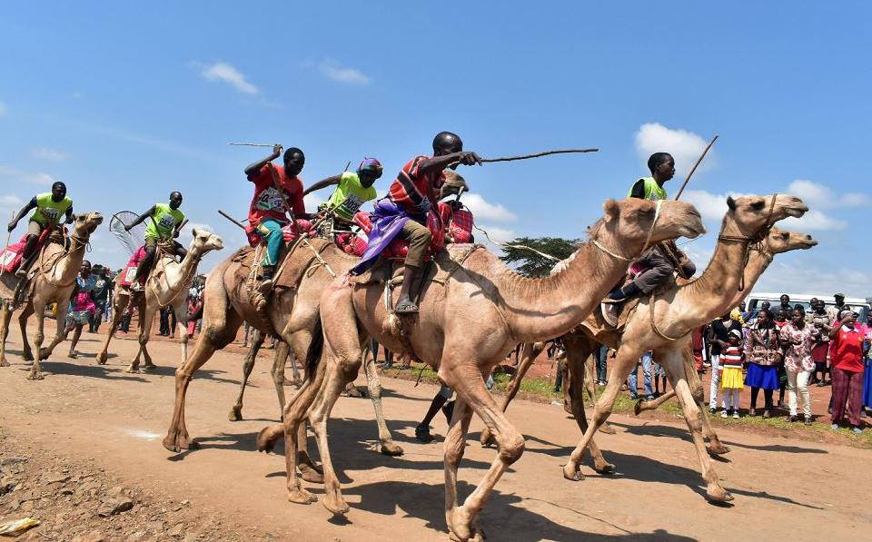 Corrida de camelos durante a 29ª edição do Derby Maralal internacional no condado de Samburu, norte do Quênia. O evento realizado anualmente visa promover o desporto e o turismo cultural.