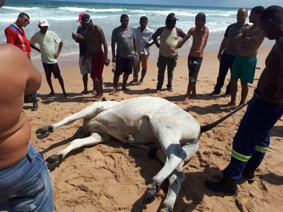 Após ser retirado da água, animal não resistiu