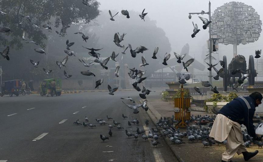Pombos são alimentados em Lahore, no sul do Paquistão.