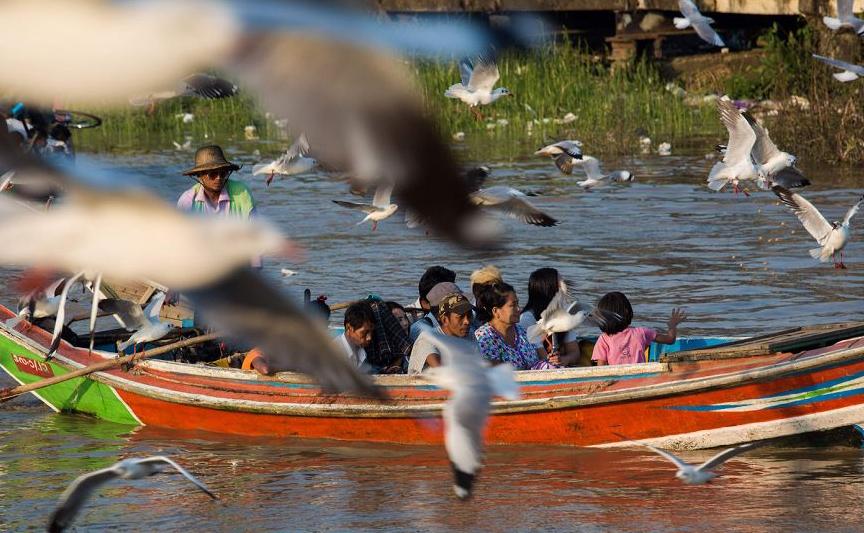 Bando de gaivotas ao redor de um barco no rio Yangon,  em Yangon, Mianmar.