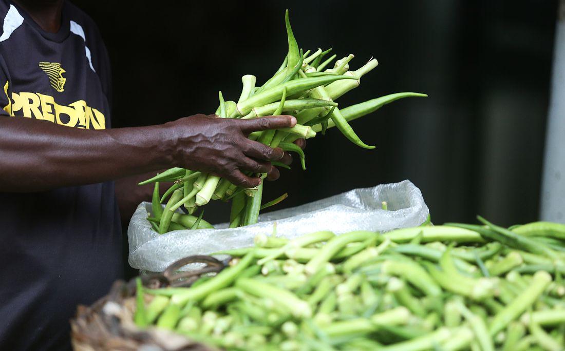 Venda de quiabo aumenta bastante na Semana Santa e feirantes apostam nisso